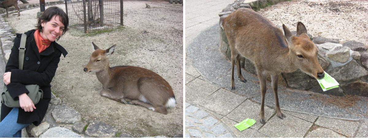 miyajima-cervos